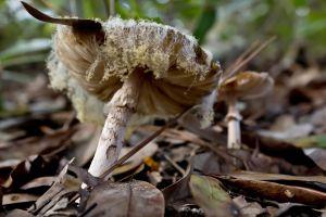 mushroombangs_7582.jpg