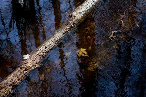 swamp_leaf_log.jpg