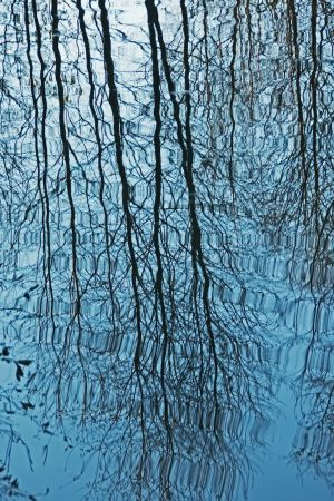 Reflection-Wavy Trees copy-c85.jpg