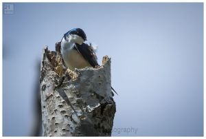 Swallow%20by%2021%20Mpix%20Photography%20-8481.jpg