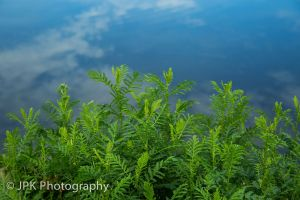 ferns%20and%20sky-0229.jpg